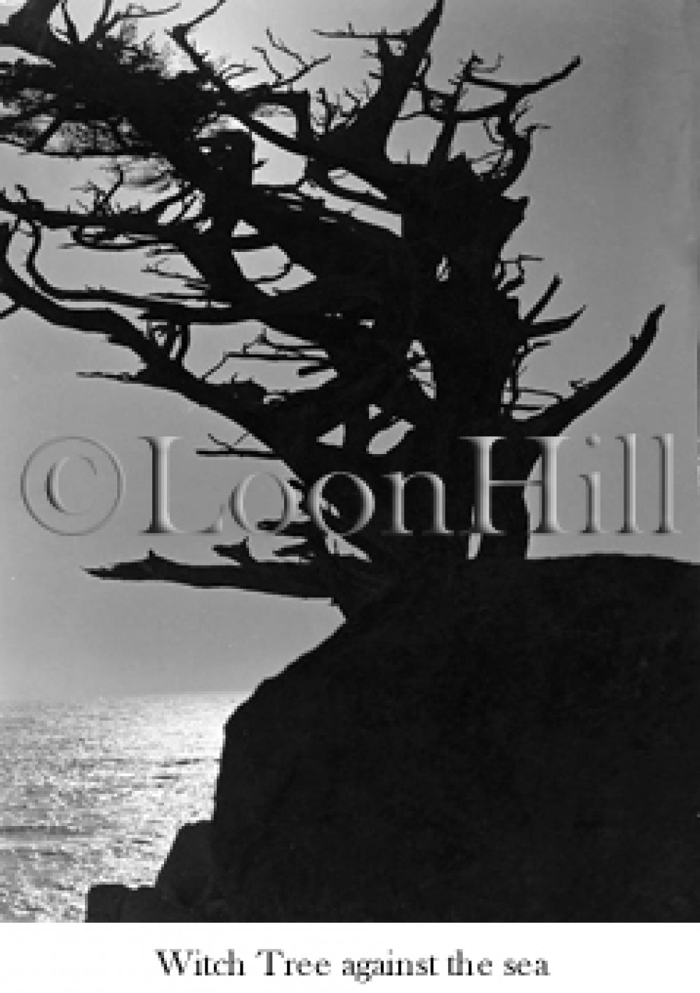 witch tree at pescadero point